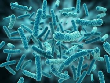 Um exemplo de microevolução é a resistência que algumas bactérias apresentam a alguns antibióticos