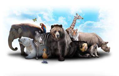 Alguns nomes dos animais em espanhol são os mesmos que são utilizados no Português