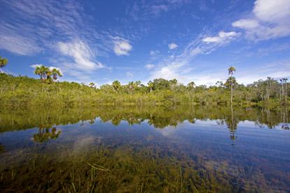 Uma reflexão em direção à importância da manutenção das vegetações nativas é fundamental para se pensar na reforma do Código Florestal