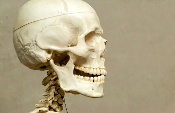 O esqueleto possui como função proteger órgãos internos