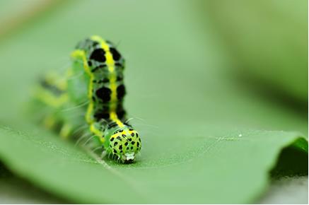 As plantas possuem compostos químicos que funcionam como mecanismos de defesa contra seus predadores