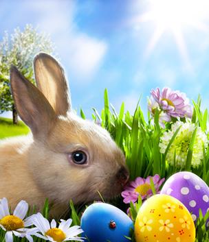 O coelho e o ovo remetem à ideia de fertilidade, de nascimento
