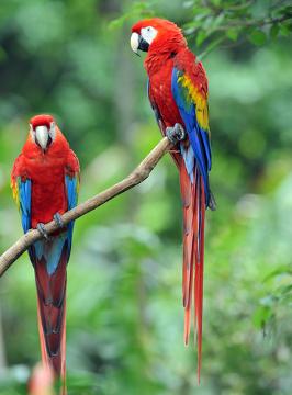 As aves possuem penas que funcionam como isolante térmico, além de auxiliarem no voo e ajudarem na atração dos parceiros