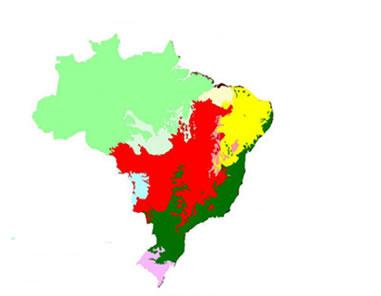 Distribuição dos biomas no Brasil