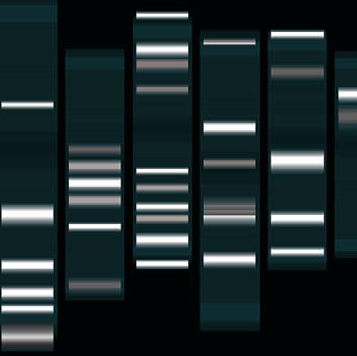 A eletroforese é a técnica aplicada para a identificação dos fragmentos do DNA