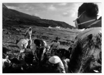 Pessoas fazendo limpeza em animais atingidos pelo derramamento de petróleo em uma praia