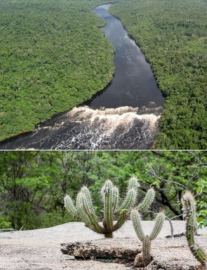 O Brasil apresenta uma rica diversidade quanto aos seus tipos de vegetação
