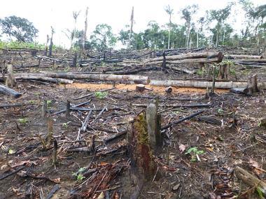 O desmatamento da Amazônia poderá intensificar a savanização da floresta