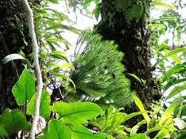 A botânica é uma área da biologia que estuda as características apresentadas pelos vegetais