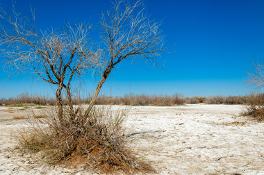A salinização torna os solos improdutivos