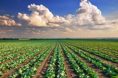 Grande parte da produção de alimentos no Brasil é realizada em minifúndios.
