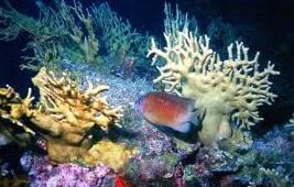 Os oceanos são muito importantes para a vida na Terra. (Créditos: Agência Petrobras / Marcelo Vallin)