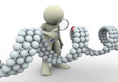As mutações podem ser gênicas, quando atingem os genes; ou cromossômicas, quando alteram os cromossomos