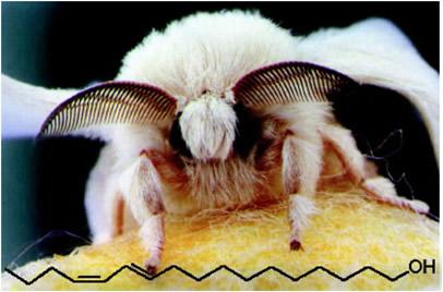 Imagem da mariposa do bicho-da-seda e a estrutura do bombicol, primeiro feromônio sexual de um inseto a ser isolado