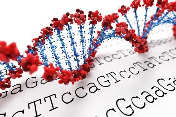A atrofia muscular espinhal é uma doença genética ligada ao cromossomo 5