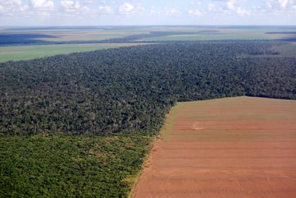 Um processo histórico de devastação e desmatamento marcou a história do Brasil.