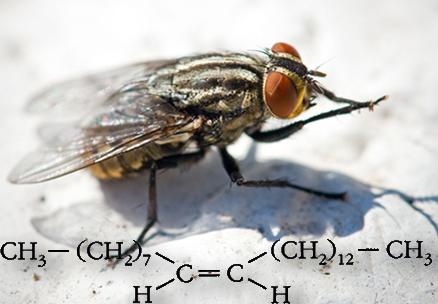 O feromônio da mosca doméstica que atrai os machos é o isômero Z do 9-tricoseno. O seu isômero E não causa nenhum efeito