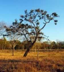 Imagem do Cerrado que corresponde à vegetação brasileira mais rica em biodiversidade