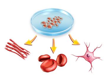 Atividades lúdicas podem auxiliar no ensino de conceitos a respeito de células-tronco