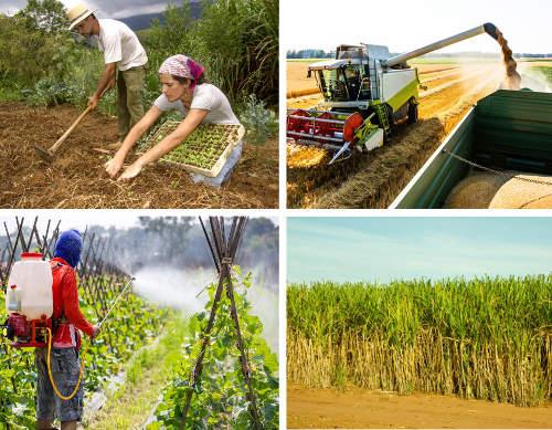 A agricultura intensiva e extensiva são modalidades opostas no que diz respeito ao montante de recursos empregados na produção