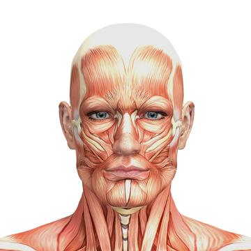 A anatomia estuda a fundo a estrutura do nosso corpo