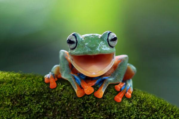 A Biologia é a ciência responsável pelo estudo dos seres vivos.