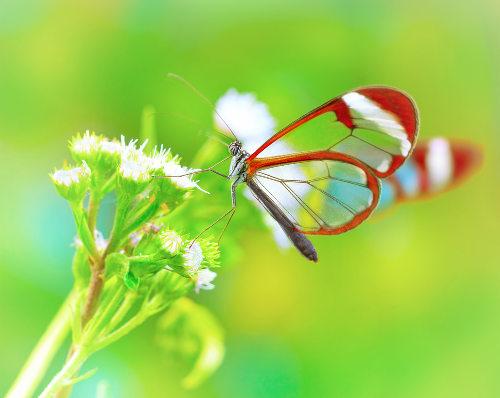 A borboleta é um artrópode que sofre metamorfose completa