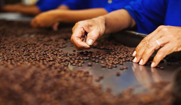 A catação é um dos métodos mais antigos de separar impurezas de grãos.