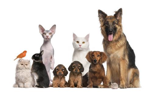 A classificação dos seres vivos permite um melhor organização dos estudos
