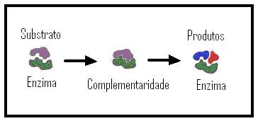 A complementaridade enzima substrato (chave e fechadura)