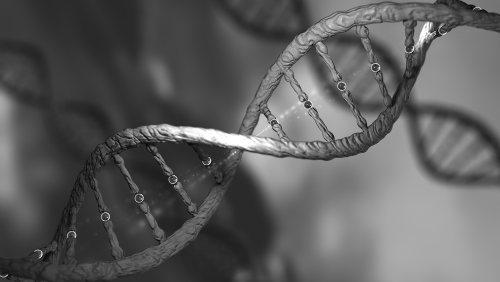 A constituição genética de um organismo é definida como genótipo