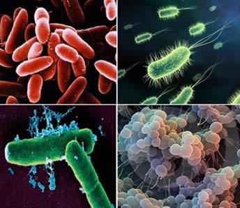 A diversidade de organismos do Reino Monera.