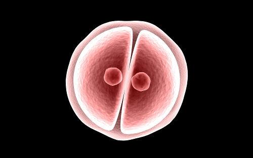 A forma como ocorre a divisão do zigoto está relacionada com a quantidade de vitelo do ovo