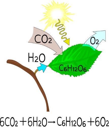 A fotossíntese é um processo bastante complexo que ocorre nos cloroplastos