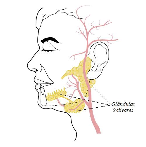 A glândula salivar é um tipo de glândula exócrina, pois a secreção é lançada no interior da boca