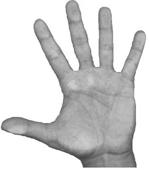 A palma da nossa mão possui digitais que ajudam a deixá-la antiderrapante