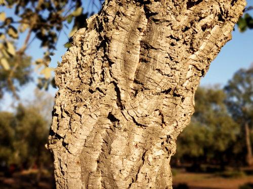 A periderme é um conjunto de tecidos de revestimento de plantas com crescimento secundário
