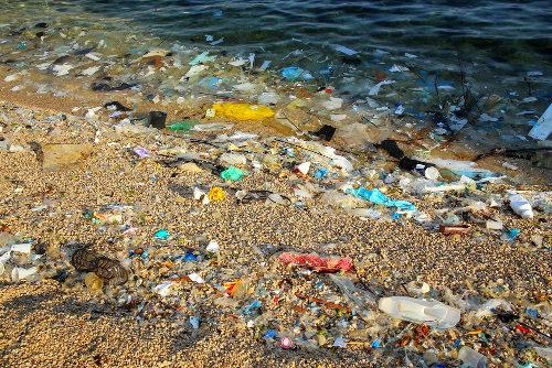 A poluição traz consequências graves a todos os seres vivos de um ecossistema
