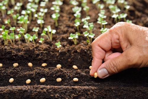 A semente abriga o embrião da nova planta que surgirá