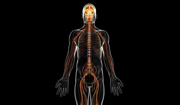 A SGB atinge os nervos periféricos e craniais