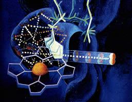 A síntese anabólica e catabólica de substâncias para o funcionamento da célula