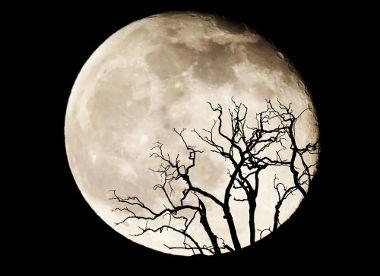 A Superlua ocorre quando a Lua está na fase cheia e no ponto de maior proximidade com a Terra