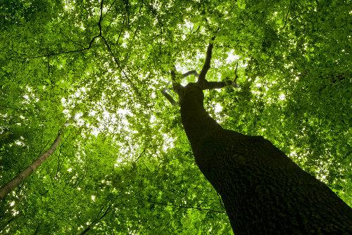A teoria da coesão-tensão explica como a água segue das raízes até as folhas