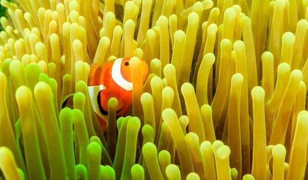 A variedade e variabilidade das espécies do planeta podem ser definidas como biodiversidade