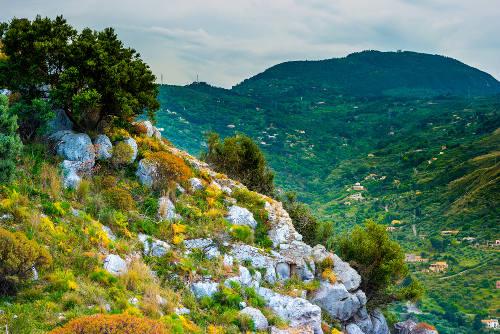 A vegetação mediterrânea está adaptada aos verões quentes e secos e aos invernos frios