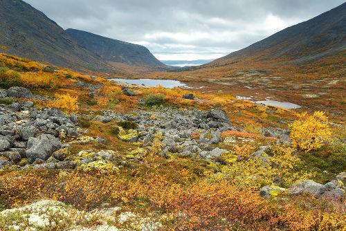 A vegetação da Tundra é composta principalmente por musgos e líquens