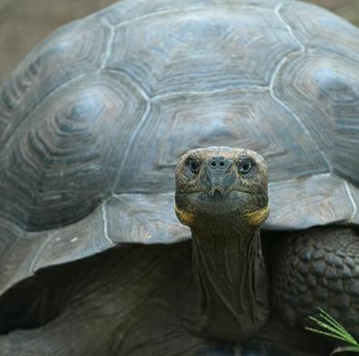 George Solitário simbolizava o precário estado da biodiversidade em todo o mundo
