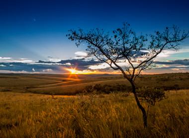 A devastação do Cerrado pode colocar em risco a existência desse domínio natural
