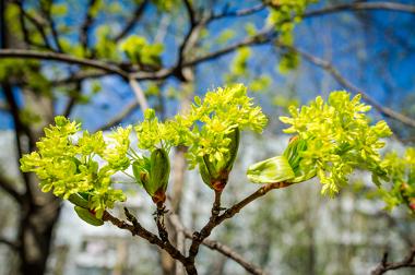 A primavera é conhecida como a estação das flores, embora essa não seja necessariamente uma regra