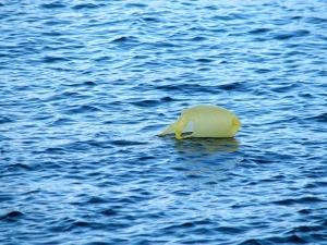 O Fim da sacola plástica é uma das medidas adotadas para a diminuição da poluição do meio ambiente